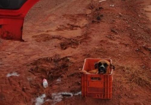 Cachorro de raça é resgatado em estrada