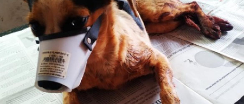 Cachorra é Atropela e Socorrida