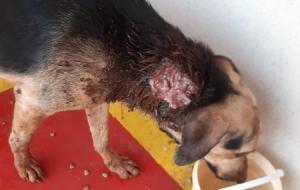 Cachorro é internado em clinica para recuperação