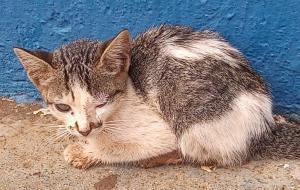 Ong recebe denúncia de gatinho abandonado em área central