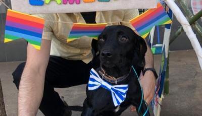 Empresa adota um cachorro de rua e vira exemplo em Uraí