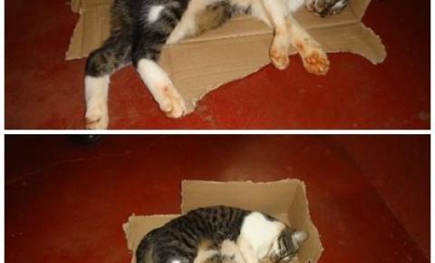 Gato é encontrado envenenado