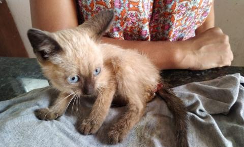 Gatinho é resgatado com bicheiras