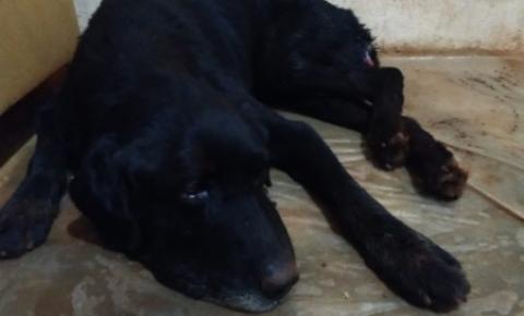 Cachorro é resgatado com bicheira