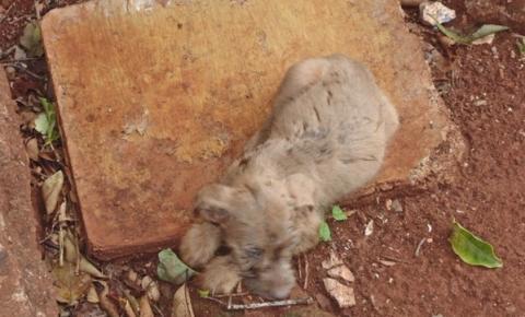 Morador de Urai é acusado de prática de abuso e de maus tratos contra animais.