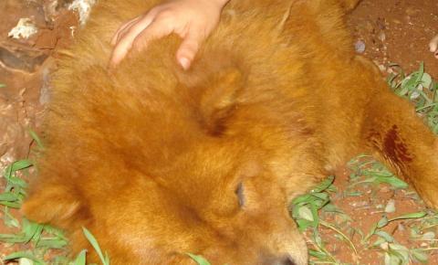 Cachorro vem a óbito vítima de atropelamento e revolta moradores de Uraí