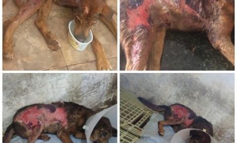 Ong SPA Uraí denuncia maus tratos a um cachorro e polícia civil investiga o caso