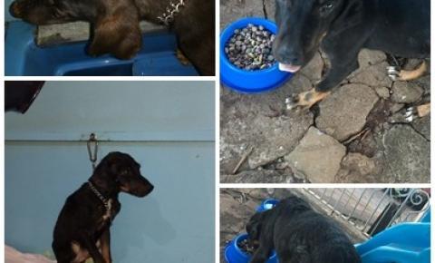 Cachorro é encontrado com machucado e carrapatos