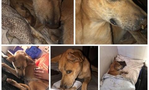 Cachorro com pneumonia é resgatado