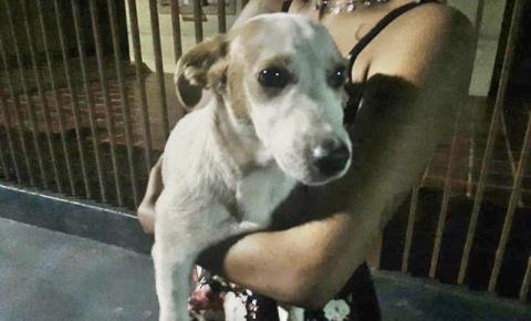 Homem acusado de agredir cachorro em Ibiporã é identificado e responderá na Justiça