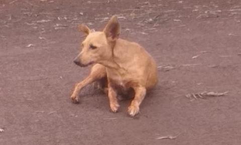 Cachorra é Atropelada e Abandonada na Rua