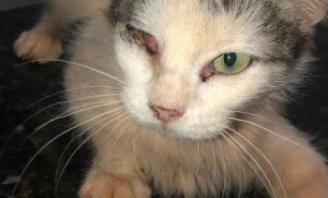 Ong verifica denúncia de gatos debilitados