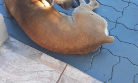 Ong averigua denúncia de cachorro doente