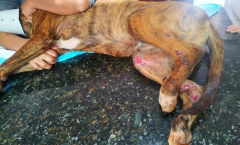 Cachorro é atropelado na Av. Paraná