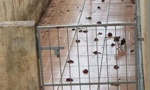 Ong SPA Uraí com apoio da pm flagra maus tratos de animais