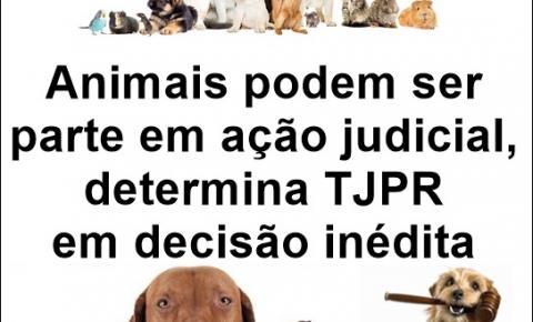 Animais podem ser parte em ação judicial, determina TJPR em decisão inédita