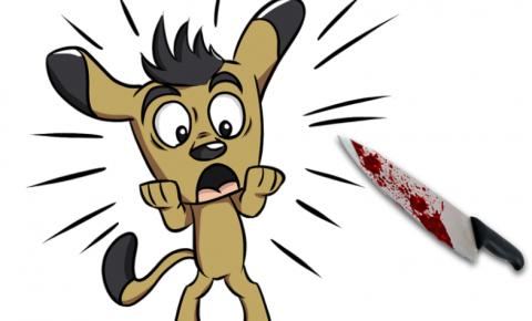 Cachorro é Esfaqueado na Av. Brasil em Uraí